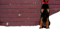 Headless Christmas Dobie
