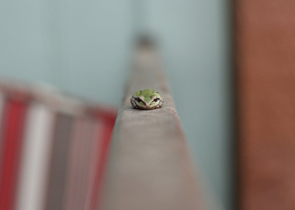 Hello, Little Frog